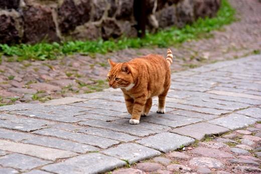 Рыжий кот Сэр Филимон из Выборгского музея-заповедника. Фотография предоставлена пресс-службой музея